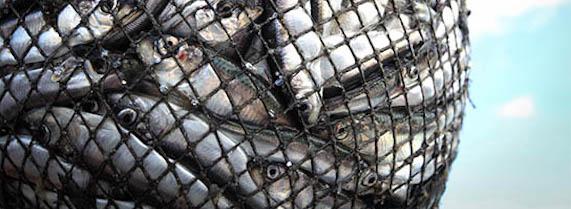 Les poissons sont sensibles