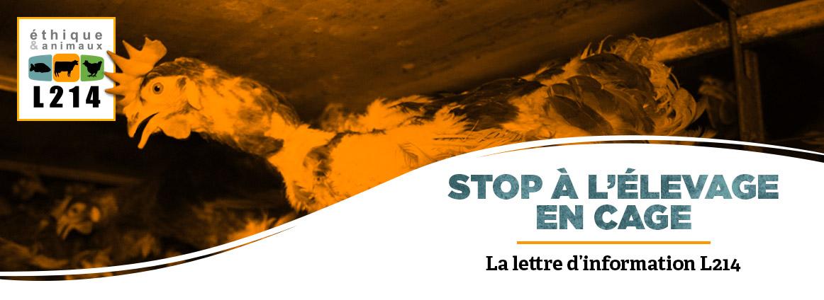Avril: stop aux oeufs de batterie!