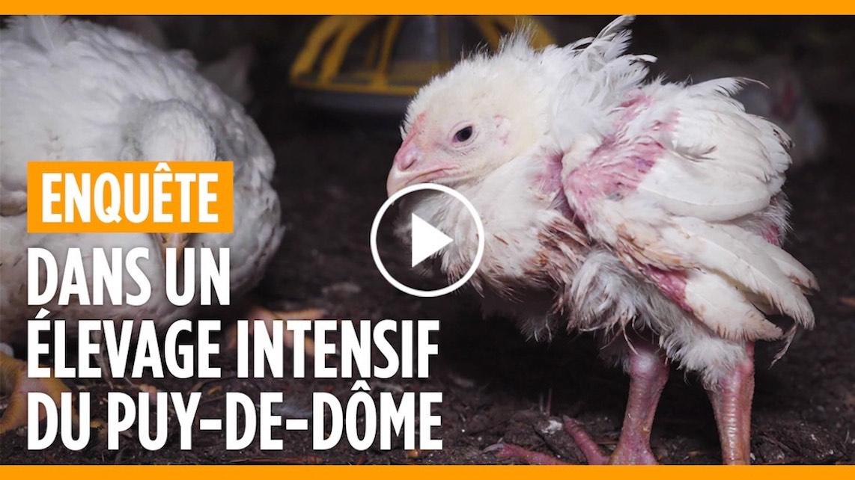 Nouvelle enquête dans élevage de poulets à Solignat