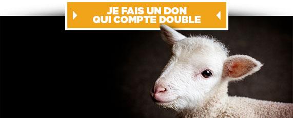 Pour les animaux, ne lâchons rien