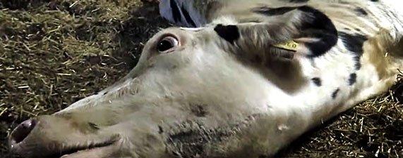 Extrait de l'enquête de Soko Tierschutz