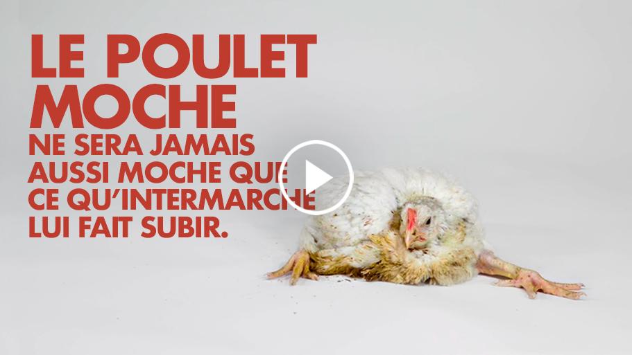 Vidéo le poulet moche