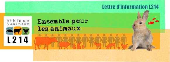 Lettre d'information L214. Ensemble pour les animaux!