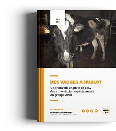 Rapport Vache Hublot