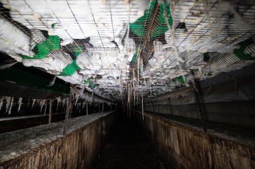Des lapins entassés dans des cages.