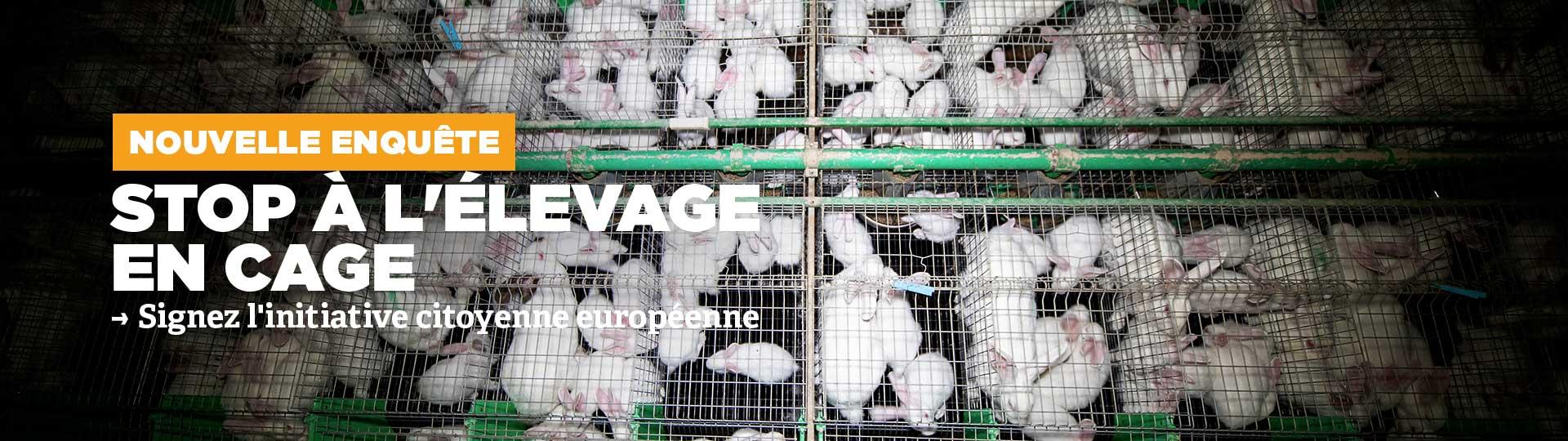 Enquête dans un élevage de lapins