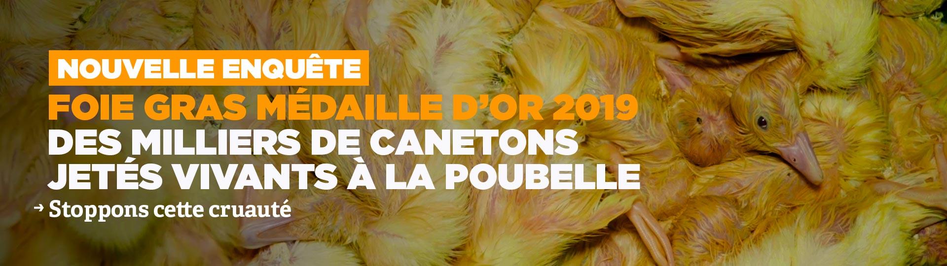 Foie gras médaille d'or