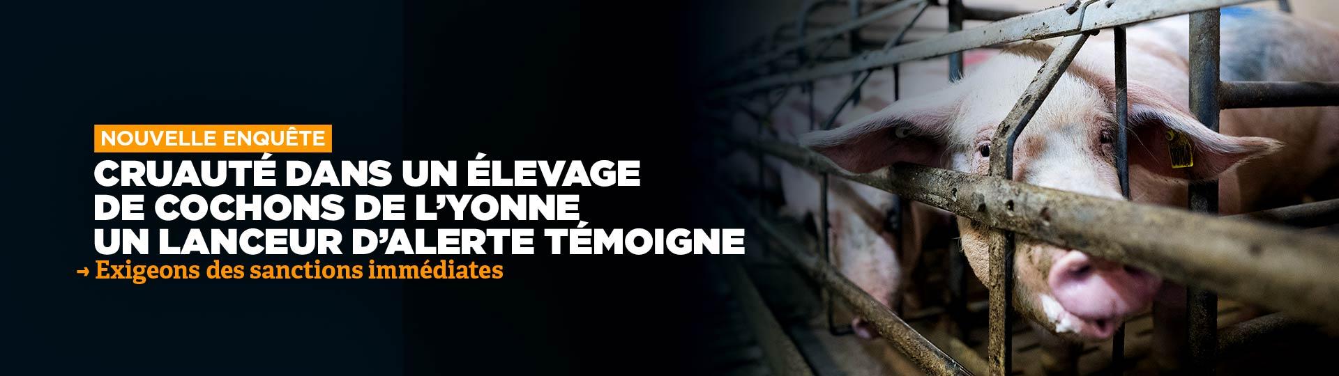 Cruauté dans un élevage de L'Yonne